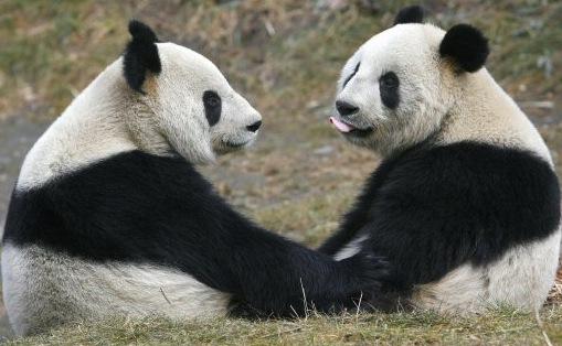 Google Talks About Pandas